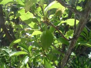 gardenapril09-003