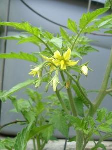 gardenapril09-009