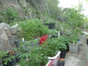 gardenapril09-010
