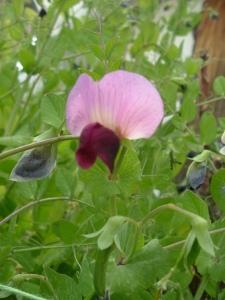 gardenapril09-018