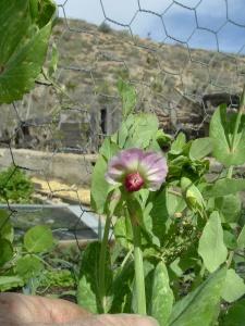 gardenapril09-021