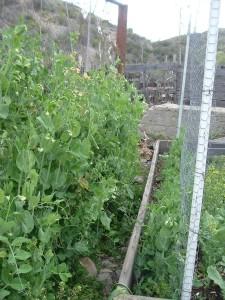gardenmarch09-011