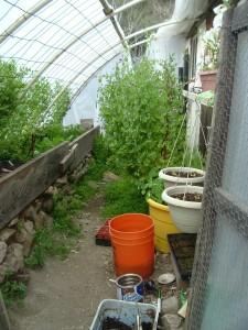 gardenmarch09-016