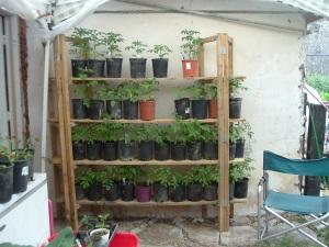 gardenmarch09-023