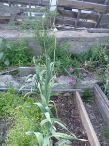 gardenapril09 007