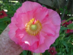 gardenapril09 008