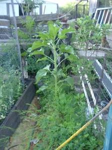 gardenapril09 010
