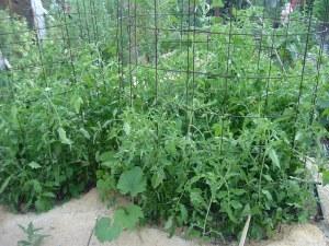 gardenapril09 011