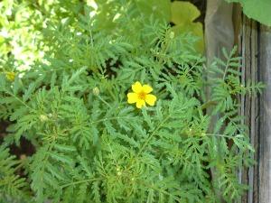 gardenapril09 012