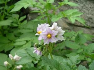 gardenapril09 016