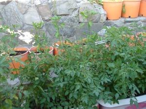 gardenapril09 017