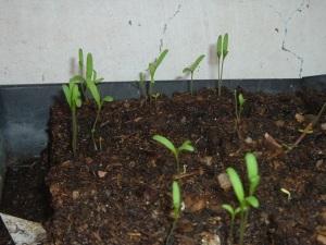 gardenapril09 019