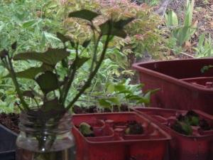 gardenapril09 021
