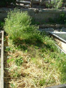 gardenapril09 025