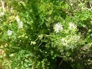 gardenapril09 028