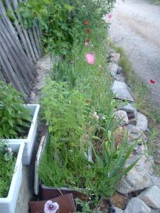 gardenapril09 032