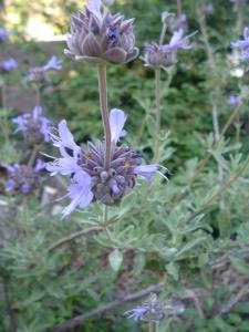 gardenapril09 033