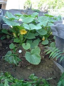 gardenapril09 036