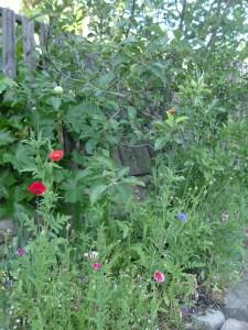 gardenapril09 037