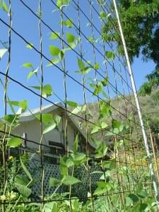 gardenJune09 007