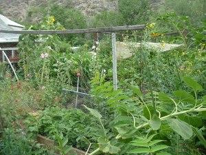 gardenJuly09 003