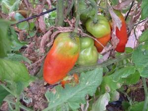 gardenJuly09 005