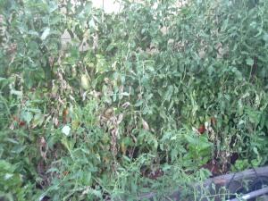 gardenJuly09 006
