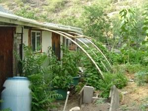 gardenJuly09 009