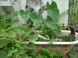 gardenJuly09 015