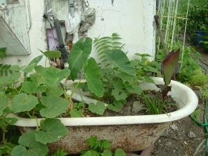 gardenJuly09 022