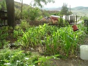 gardenJuly09 026