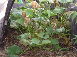 gardenJuly09 032