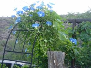 gardensept09 001