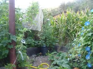 gardensept09 003