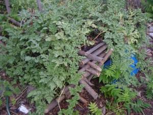 gardensept09 004