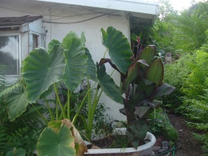 gardensept09 005
