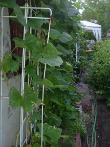 gardensept09 006