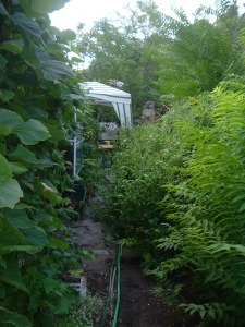 gardensept09 007