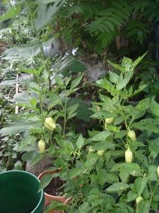 gardensept09 010