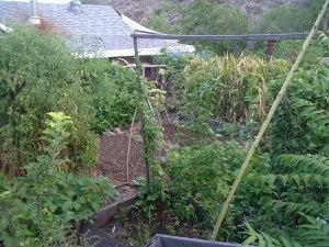 gardensept09 011