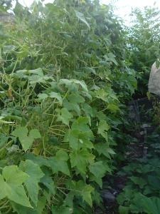 gardensept09 014