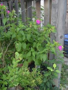 gardensept09 015
