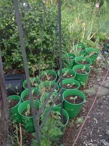 gardensept09 016